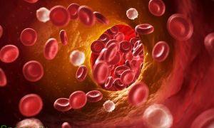 Как дома очистить кровь народными методами
