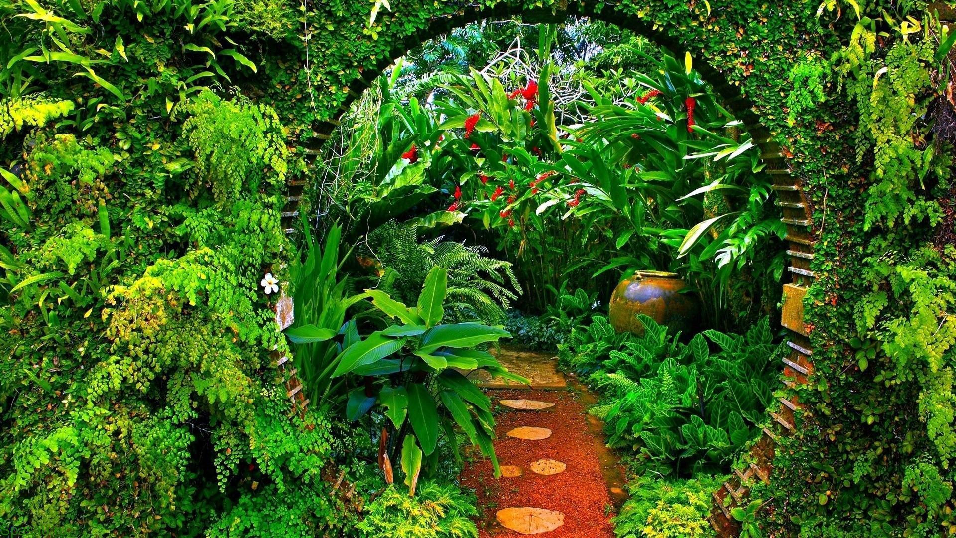 Целебные растения
