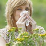 Аллергия на амброзию. Лечение взрослых и детей народными средствами
